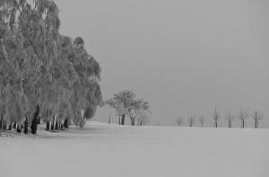 Weihnachtsgruß Winter